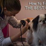 15 Best Dog Clippers for Professionals 2020 Updated