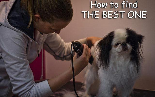 women grooming a dog using clipper