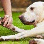 5 Best Nail Clippers for Large Dogs