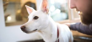 Read more about the article Best Dog Food for Seizures