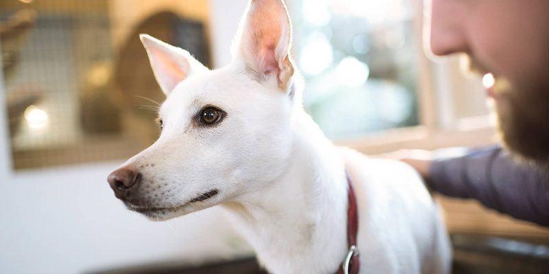 best food for dog with-seizures-2