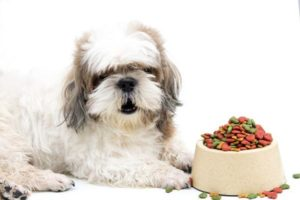 Read more about the article 5 Best Dog Food for Shih Tzus