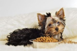 5 Best Dog Food for Yorkies