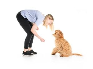 Best Dog Food for Goldendoodles