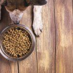 5 Best Dog Food for Bad Breath