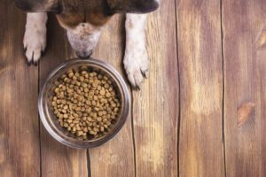 Find out the Best Dog Food for Bad Breath Today