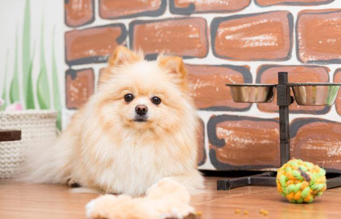 You are currently viewing Best Dog Food for Pomeranians