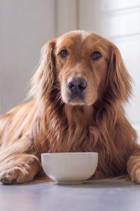 Best Large Breed Dog Food