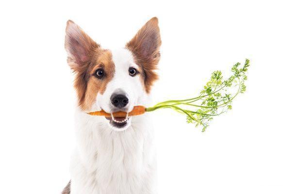 Best Organic Dog Food
