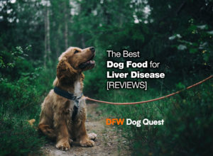 6 Best Dog Food for Liver Disease [2020 REVIEWS]