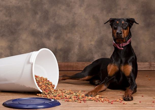 You are currently viewing Best Dog Food For Dobermans