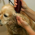 Best Dog Clippers for Matted hair [2020]