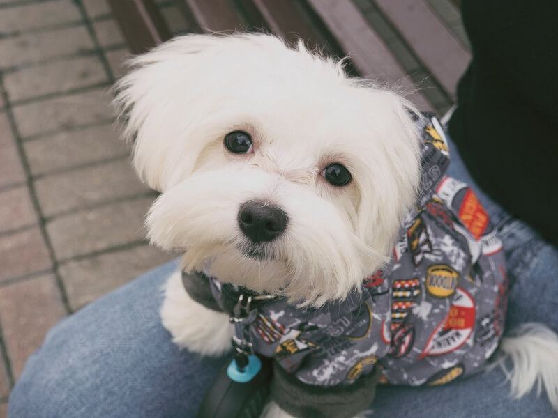 You are currently viewing Best Dog Clippers for Maltese