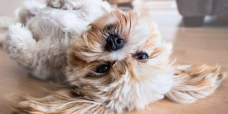 best-dog-grooming-shears