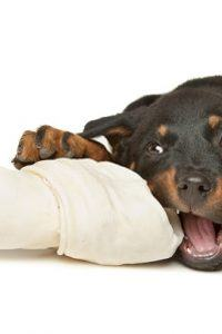 What is the Best Food for a Rottweiler Puppy