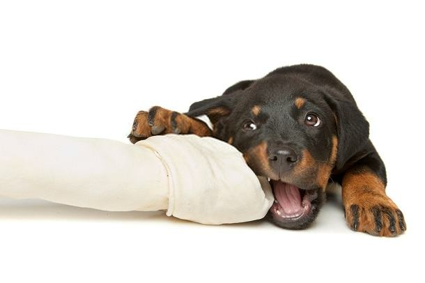 What is the Best Food for a Rottweiler Puppy?